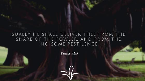 The Fowler - Spiritually Connected Today  Spiritually